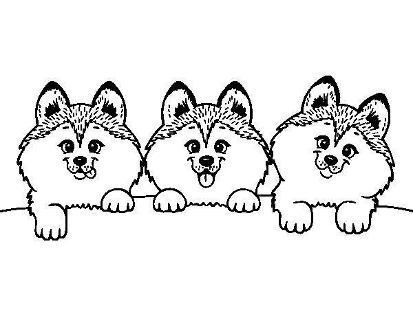 Dibujos Para Colorear De Cachorros De Perros: Dibujo De 3 Perritos Para Colorear