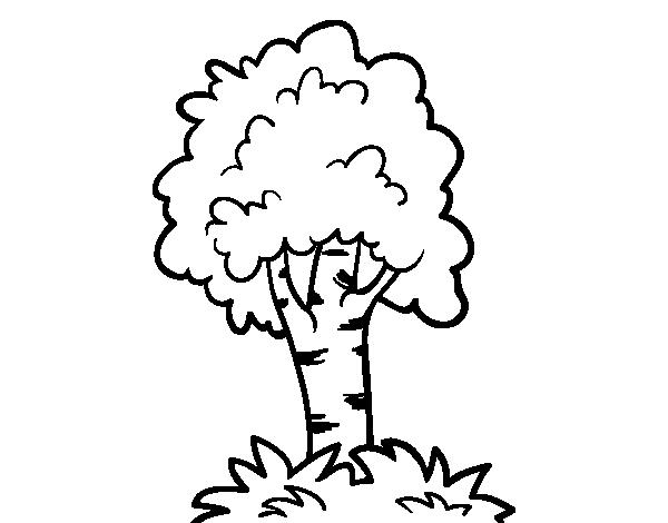 Dibujo de Árbol 7 para Colorear - Dibujos.net