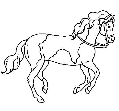 Dibujo de Caballo 5 para Colorear - Dibujos.net