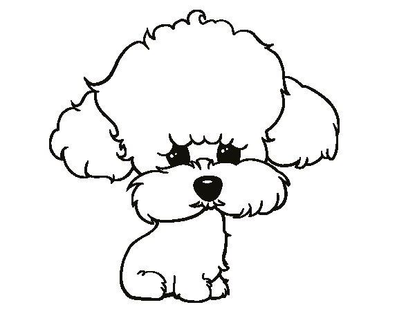 Dibujos Para Colorear De Cachorros De Perros: Dibujo De Cachorro De Poodle Para Colorear