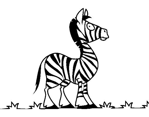 Dibujo de Cebra africana para Colorear - Dibujos.net