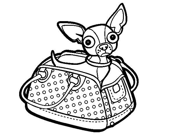 Dibujo De Chihuahua: Dibujo De Chihuahua De Viaje Para Colorear