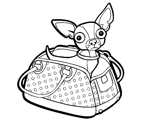 Dibujo de Chihuahua de viaje para Colorear   Dibujos.net