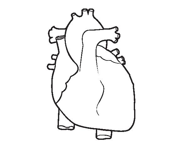 Dibujo De Corazón Humano Para Colorear Dibujosnet