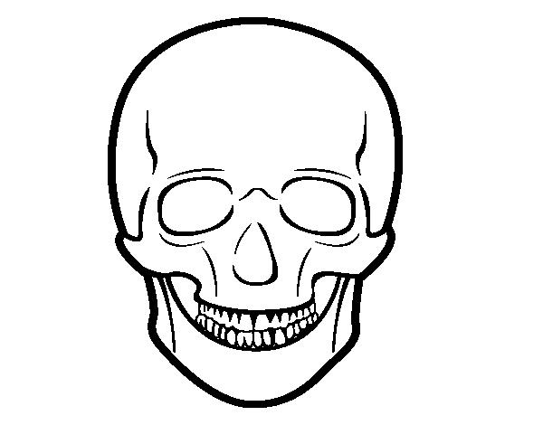 Dibujo De Cráneo Humano Para Colorear Dibujosnet