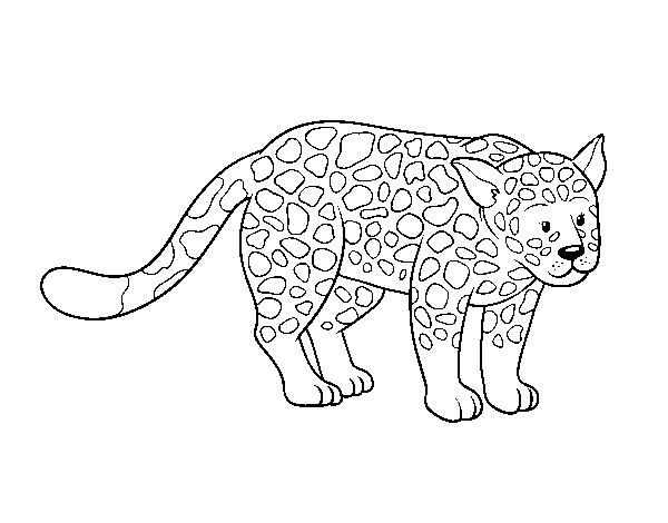 Dibujo Leopardo Para Colorear E Imprimir: Dibujo De El Guepardo Para Colorear