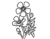 Dibujos De Plantas Para Colorear Dibujos Net