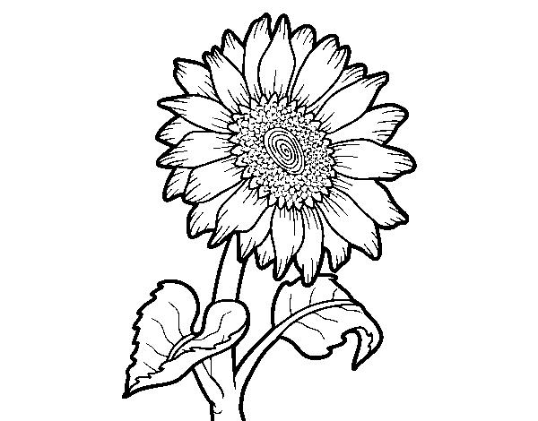 Dibujo De Flor De Girasol Para Colorear Dibujosnet