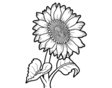 Dibujos De Flores Para Colorear Dibujosnet