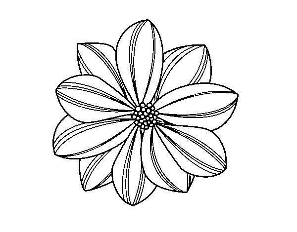 Dibujo De Flor De Margarita Para Colorear Dibujosnet