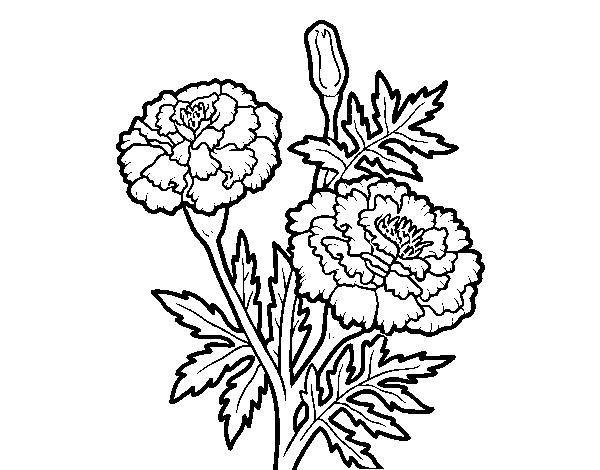 Dibujos Para Colorear De Flora: Dibujo De Flor Maravilla Para Colorear
