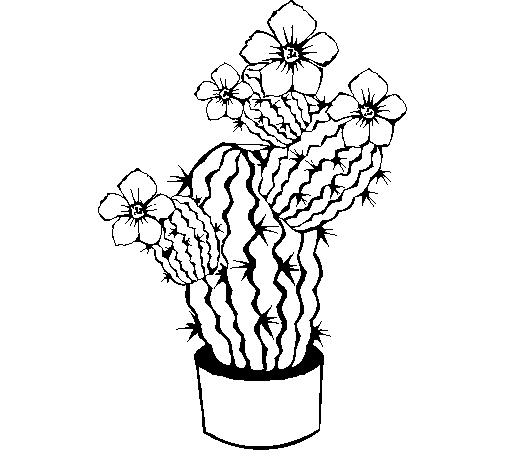 Dibujo de Flores de cactus para Colorear - Dibujos.net