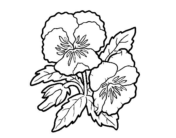 Dibujos Para Colorear De Flora: Dibujo De Flores De Pensamiento Para Colorear