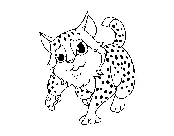 Dibujo De Gato Montés Para Colorear Dibujosnet