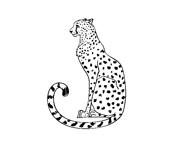 Dibujo Leopardo Para Colorear E Imprimir: Dibujo De Guepardo Sentado Para Colorear