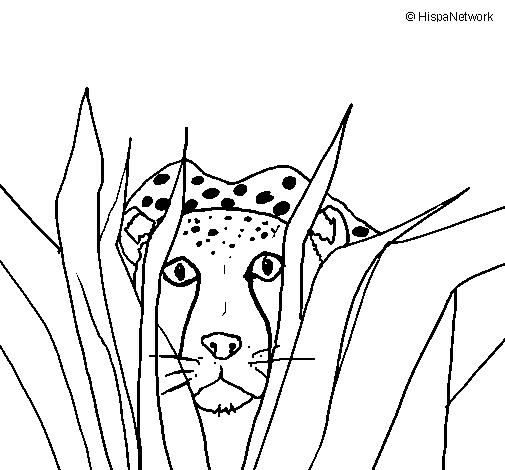 Dibujo de Guepardo para Colorear - Dibujos.net