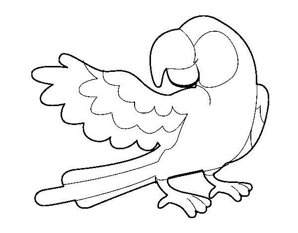 Dibujo de Loro con ala abierta para Colorear - Dibujos.net