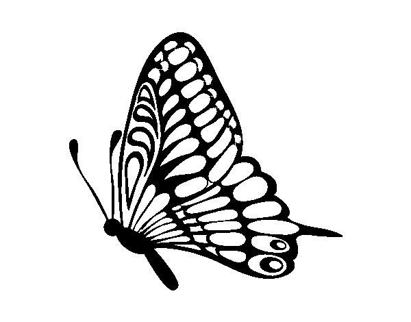 Dibujos Animados De Mariposas Para Colorear: Dibujo De Mariposa Dirección Izquierda Para Colorear
