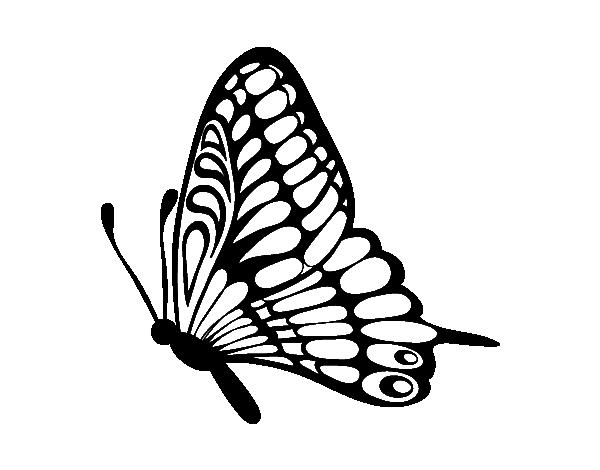 Dibujo de Mariposa dirección izquierda para Colorear - Dibujos.net