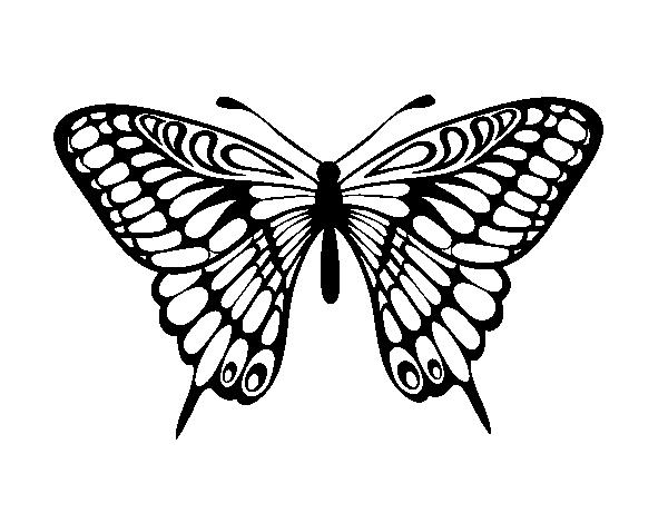 Dibujo de Mariposa gran mormón para Colorear - Dibujos.net