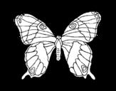 Dibujos De Mariposas Para Colorear Dibujosnet
