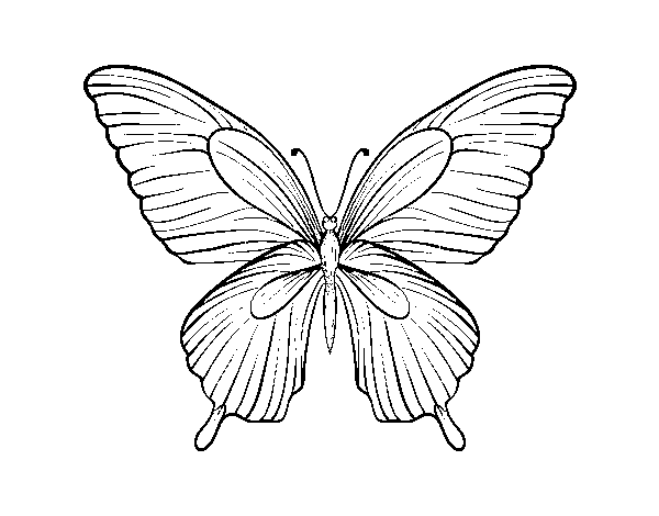 Dibujo De Mariposa Tropical Para Colorear Dibujosnet