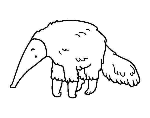 Dibujo de Oso hormiguero peludo para Colorear - Dibujos.net