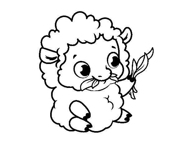 Dibujo de Oveja bebé para Colorear - Dibujos.net
