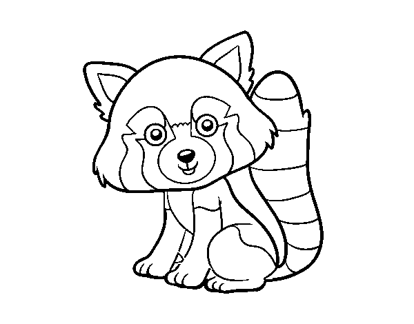 Dibujo de Panda rojo para Colorear - Dibujos.net