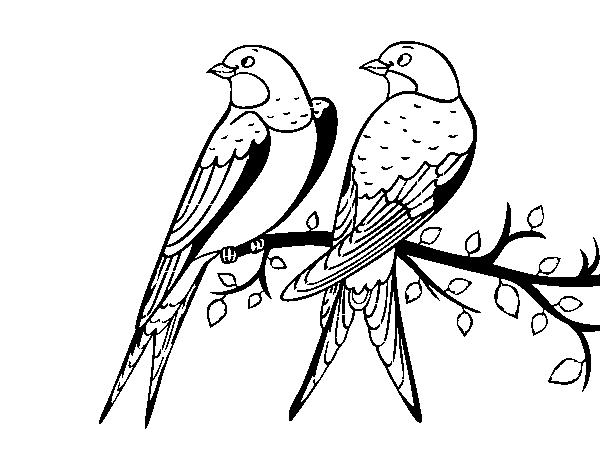 Resultado de imagen para pájaros