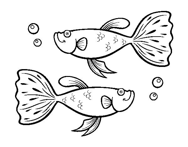 Dibujo De Peces Guppy Para Colorear Dibujosnet