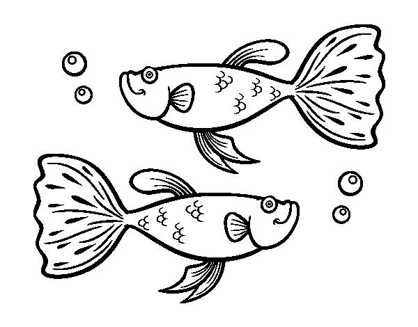 Dibujo de Peces guppy para Colorear - Dibujos.net