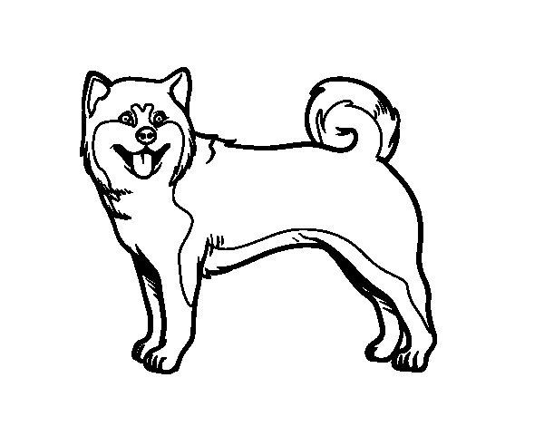 Dibujos Para Colorear De Cachorros De Perros: Dibujo De Perro Akita Inu Para Colorear
