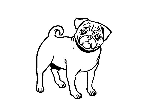 Dibujos Para Colorear De Cachorros De Perros: Dibujo De Perro Carlino Para Colorear