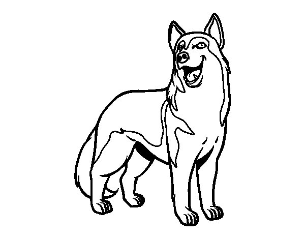 Dibujo de Perro lobo para Colorear - Dibujos.net