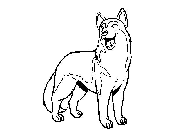 Dibujos Para Colorear De Cachorros De Perros: Dibujo De Perro Lobo Para Colorear