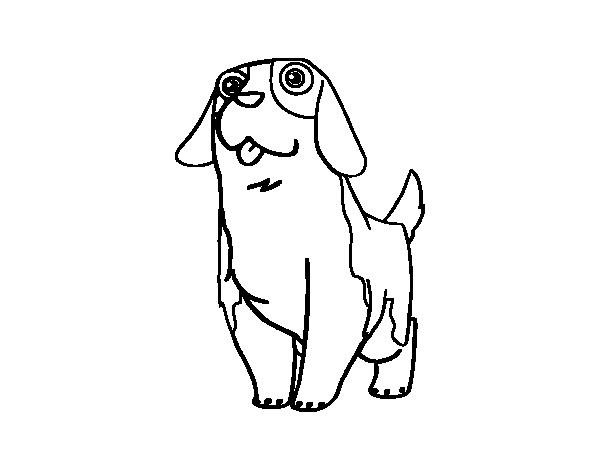 Dibujo de Perro San Bernardo joven para Colorear - Dibujos.net