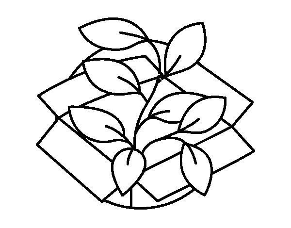 Dibujo de Planta ecològica para Colorear - Dibujos.net