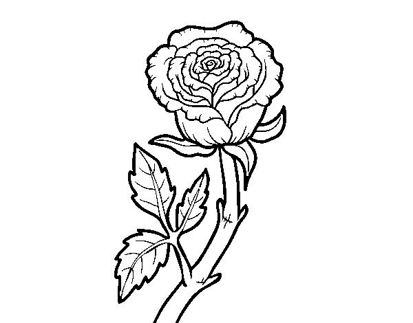 Dibujo de Rosa silvestre para Colorear - Dibujos.net