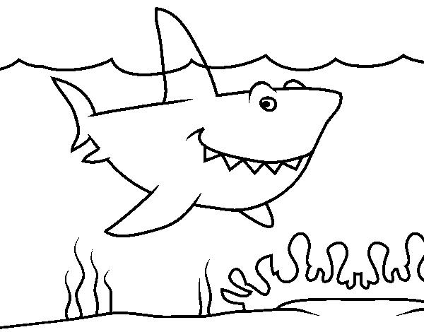Dibujo De Tiburón Marino Para Colorear Dibujosnet