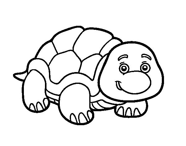 Dibujo de Tortuga de tierra para Colorear - Dibujos.net