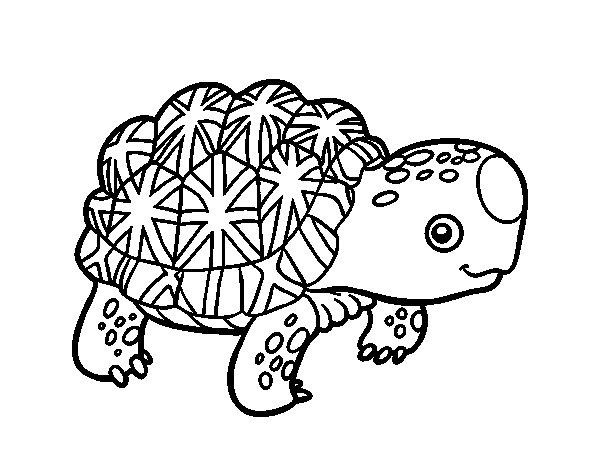 Dibujo de Tortuga estrellada de la India para Colorear - Dibujos.net
