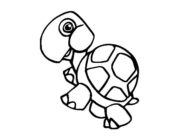 Dibujo de Tortuga terrestre para Colorear - Dibujos.net