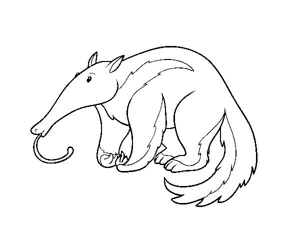 Dibujo de Un oso hormiguero para Colorear - Dibujos.net