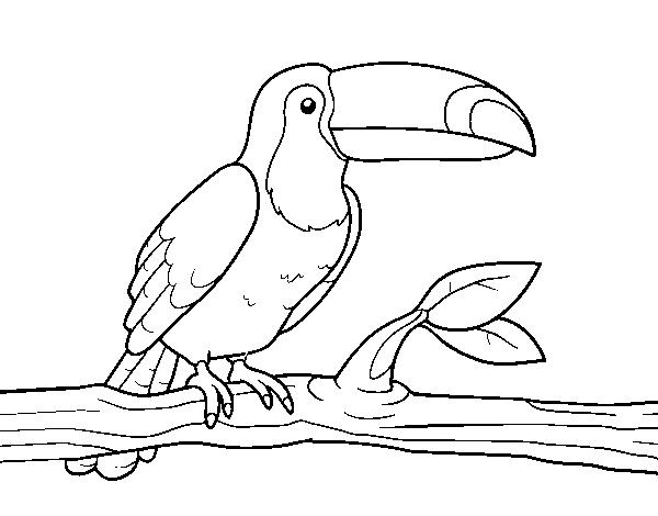 Dibujo De Un Tucán Para Colorear Dibujosnet