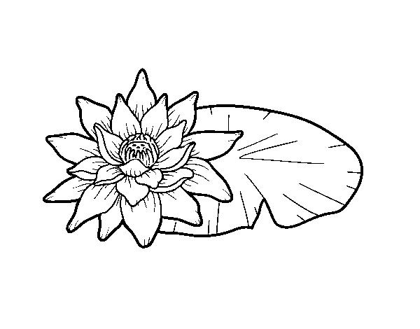 Dibujos De Flores Para Colorear Pintar E Imprimir Flores 6: Dibujo De Una Flor De Loto Para Colorear