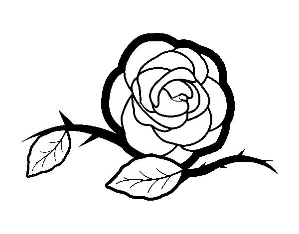 Dibujo De Una Preciosa Rosa Para Colorear