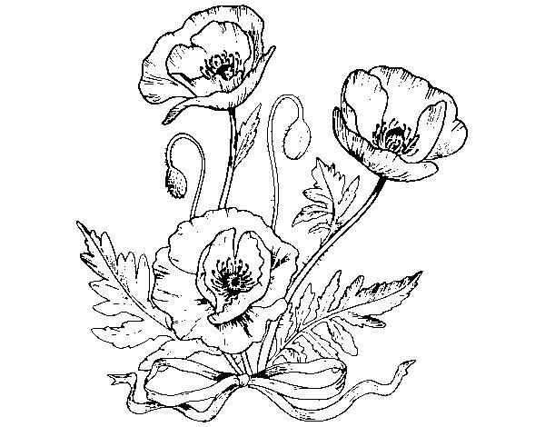 Dibujo De Flor De Cerezo Para Colorear: Dibujo De Unas Amapolas Para Colorear